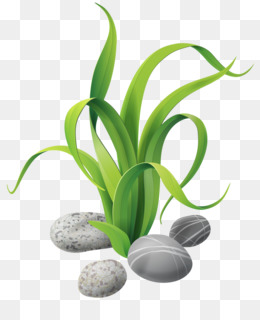 Seagrass PNG and Seagrass Transparent Clipart Free Download..