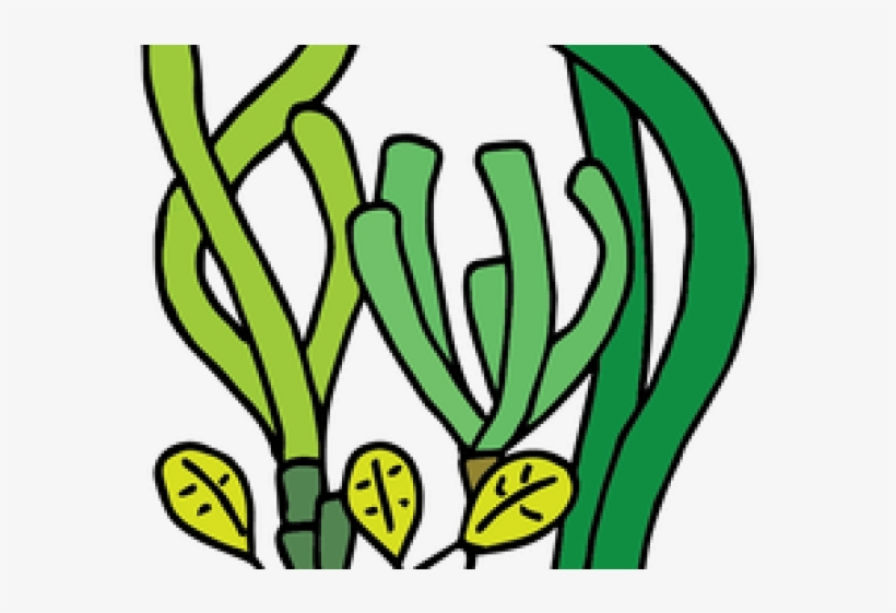 Coral Reef Clipart Seagrass.