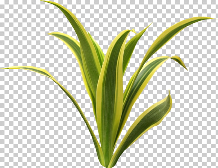 Seagrass Aquatic Plants Green, others PNG clipart.