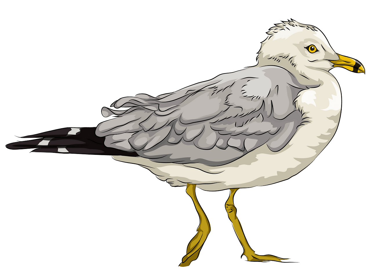 Seagull clipart. Free download..