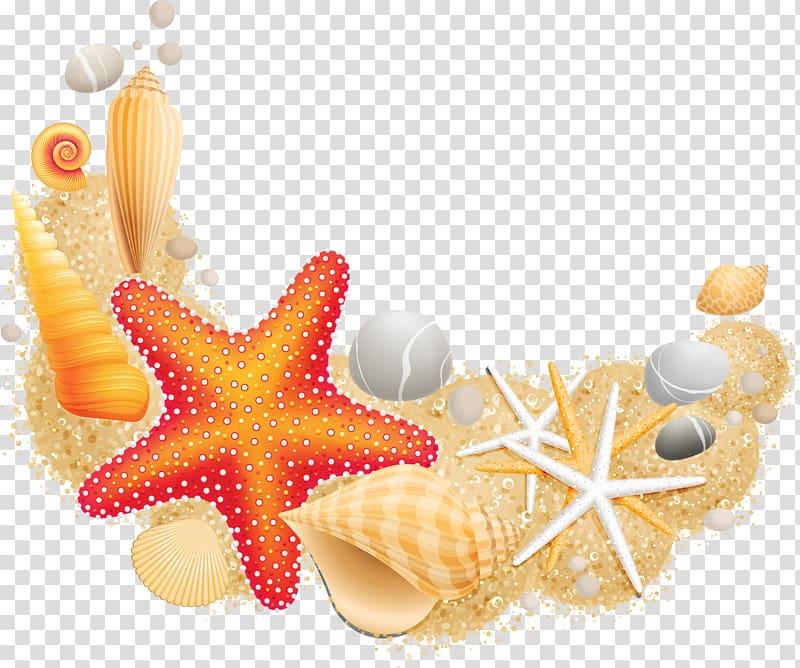 Seashells illustration, Sea Starfish Mollusc shell Vecteur.