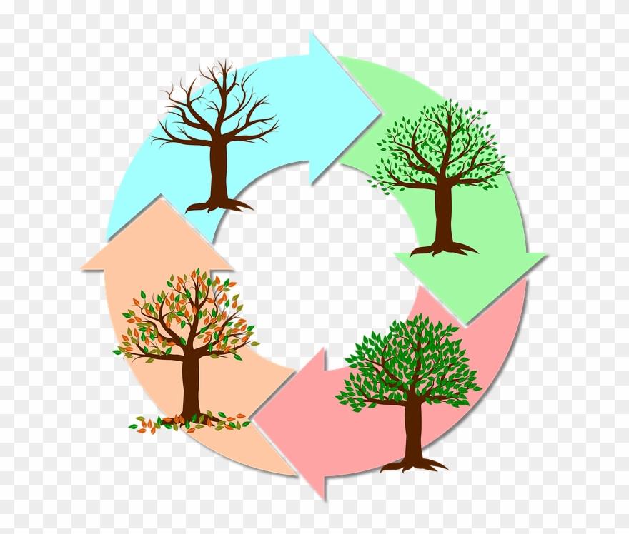 Seasons Of The Year Tree.