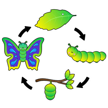 Butterfly Life Cycle Clip Art Sequence.