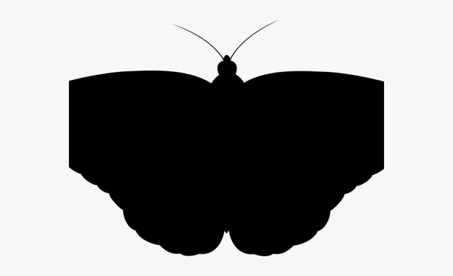 Moth Clipart Shadow.