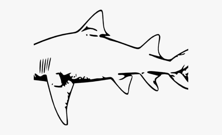 Hammerhead Shark Clipart Transparent Background.