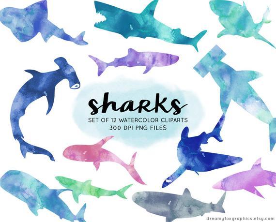 Watercolor shark clipart, shark watercolor clipart, shark digital images,  commercial use, shark png, painted sharks, ocean animals clip art.