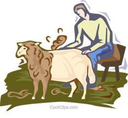 Shearing clipart.