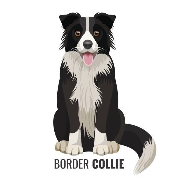 Best Sheepdog Illustrations, Royalty.