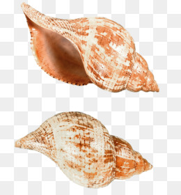 Shell Money PNG and Shell Money Transparent Clipart Free.