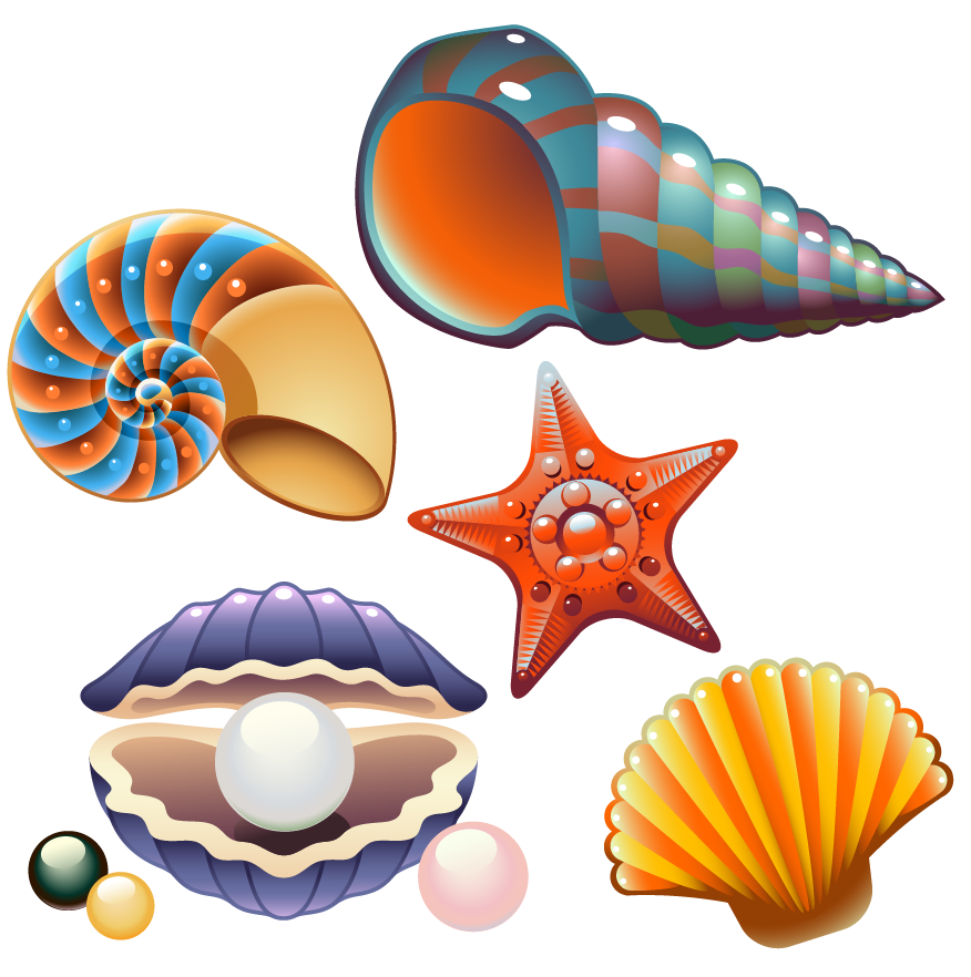 Shell clipart shellfish, Shell shellfish Transparent FREE.