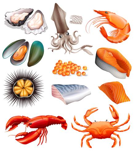 Set of seafood on white background.