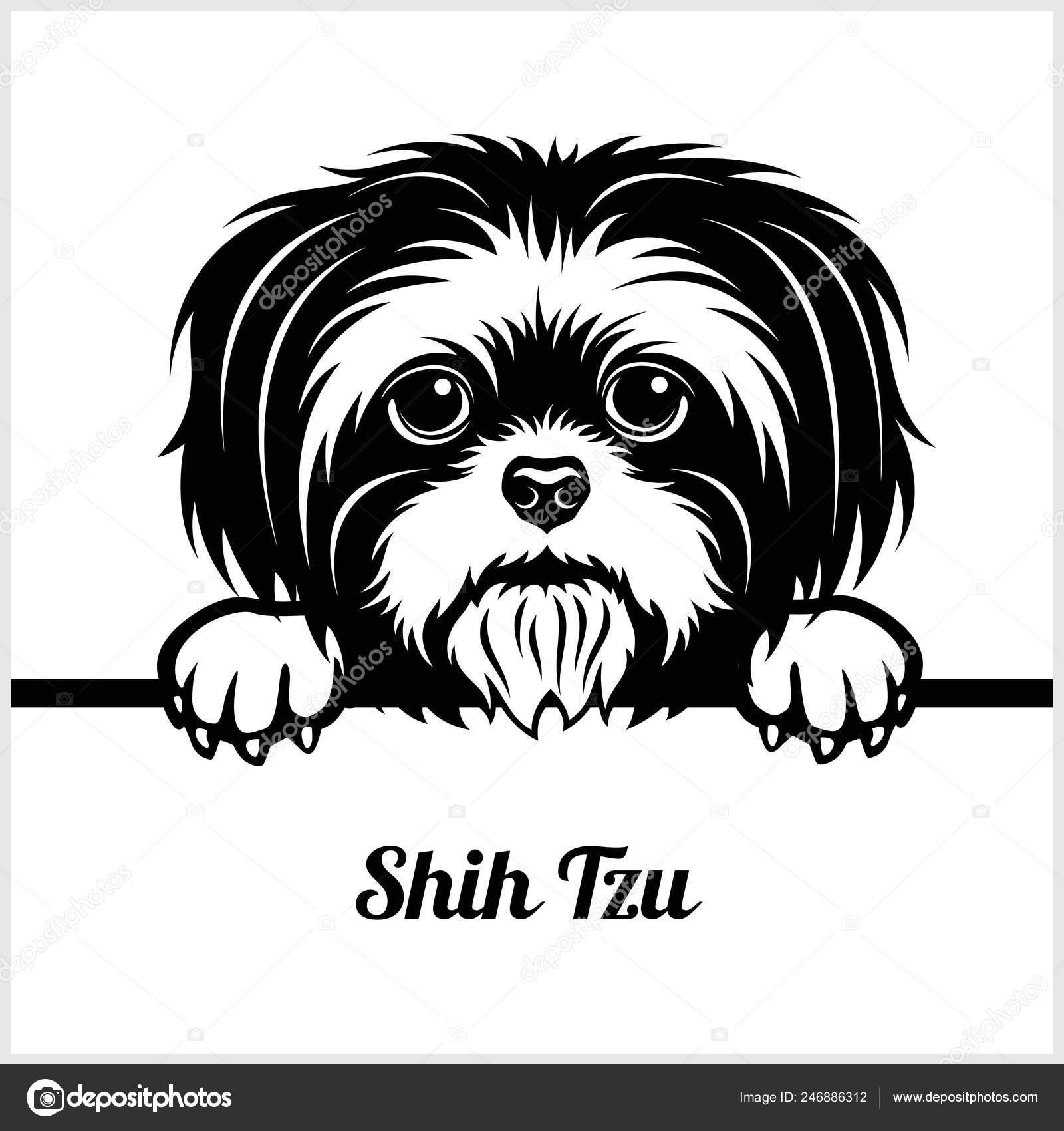 Pics: shih tzu.