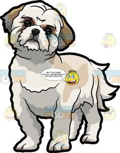 A Curious Little Shih Tzu Dog.
