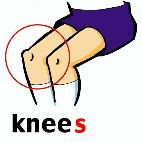 Knee Clipart.
