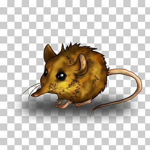 4 elephant Shrew PNG cliparts for free download.