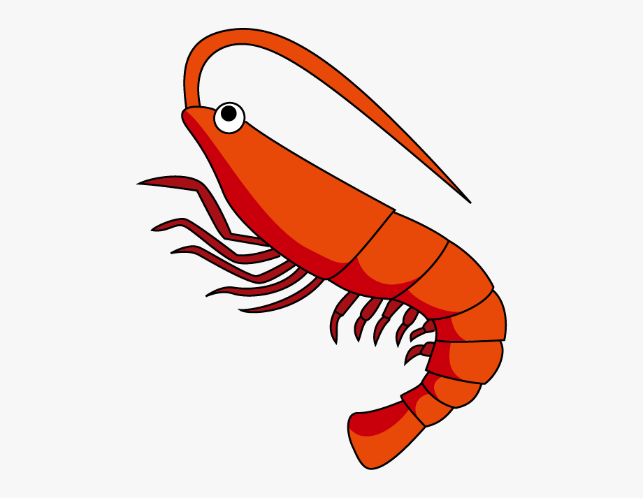Shrimp Clipart The Cliparts.