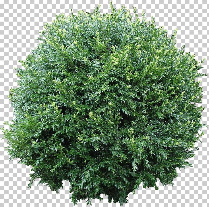 Shrub Computer Icons Tree , Bush Flora , green leafed plant.