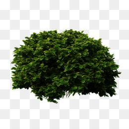 Shrubbery PNG and Shrubbery Transparent Clipart Free Download..