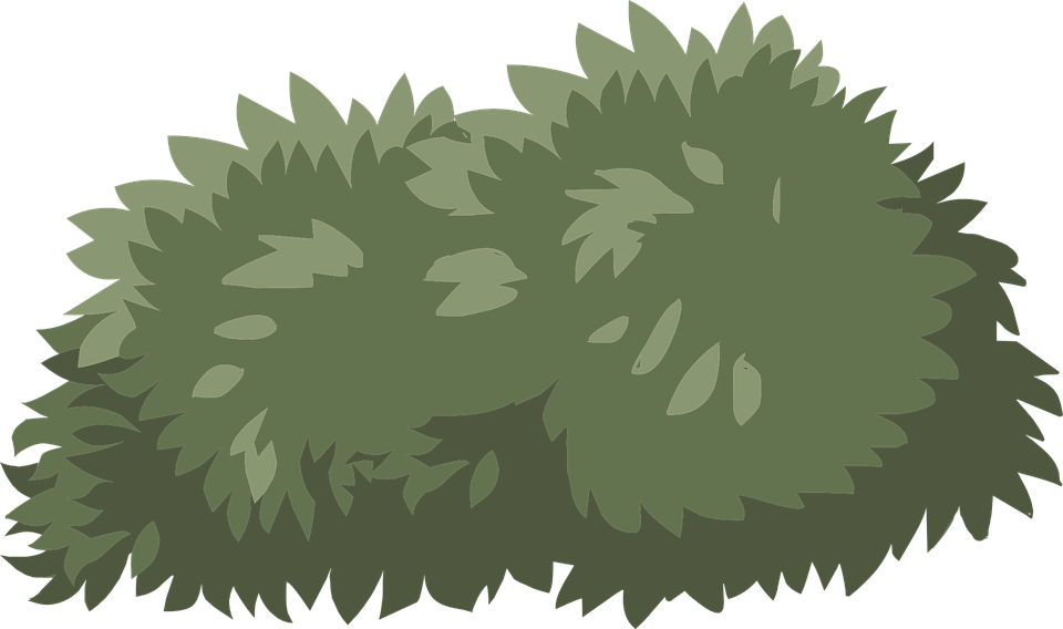 Shrubs, Architecture, Shade Shrubs, Shrub Clipart.