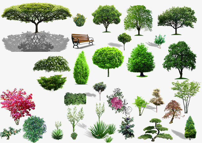 Plant Material, Plant Clipart, Shrubs, P #257347.