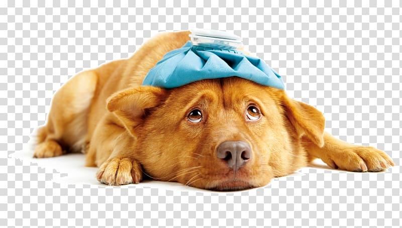 Sick dog transparent background PNG clipart.