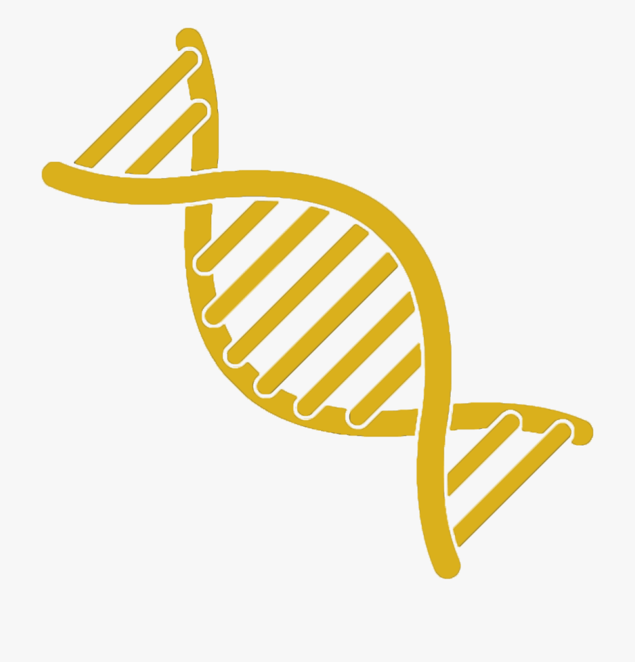Dna Typing Of Cattle Represents A Significant Improvement.