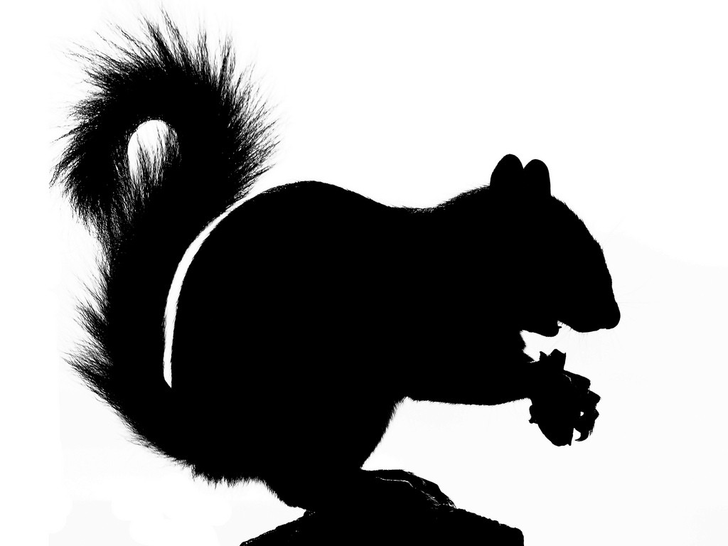 Best Squirrel Silhouette #7590.