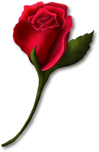 Red Rose Bud Painted Clipart.