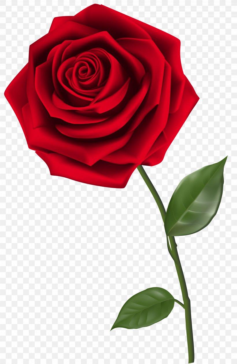 Rose Clip Art, PNG, 4026x6181px, Rose, Cut Flowers, Flora.