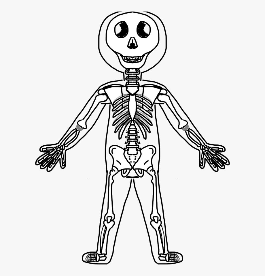 Clipart Skeleton Bones.