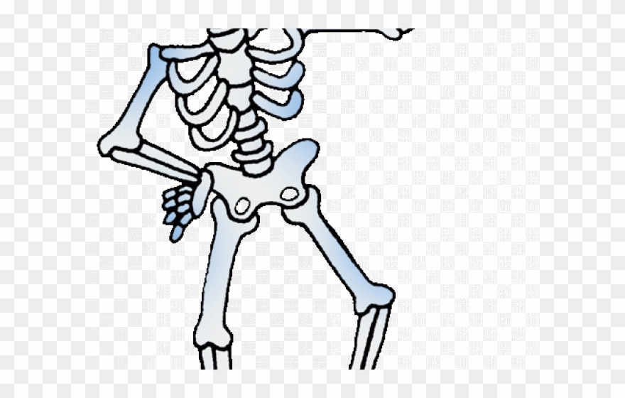 Bones Clipart Bone Health.