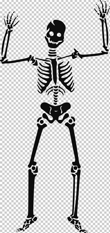 Skeleton PNG, Clipart, Skeleton Free PNG Download.