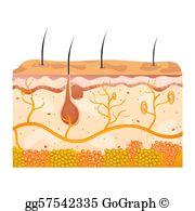 Skin Clip Art.