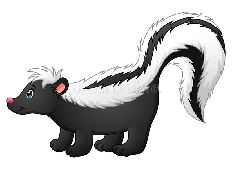 Skunk Stock Illustrations.