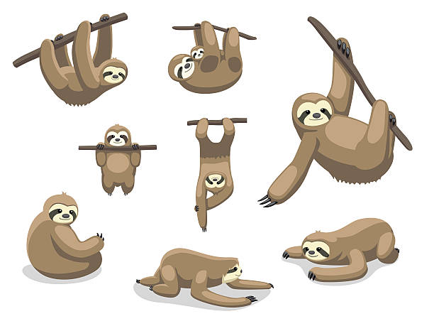Best Sloth Illustrations, Royalty.