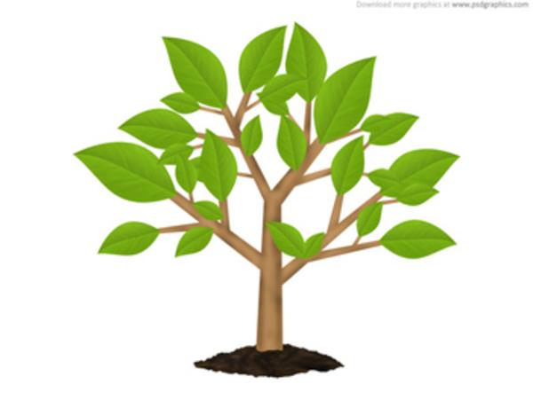 Tree Cartoon Clipart By Fluttershy.