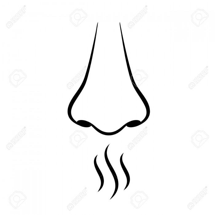 Sense Of Smell Clipart Vector, Clipart, PSD.