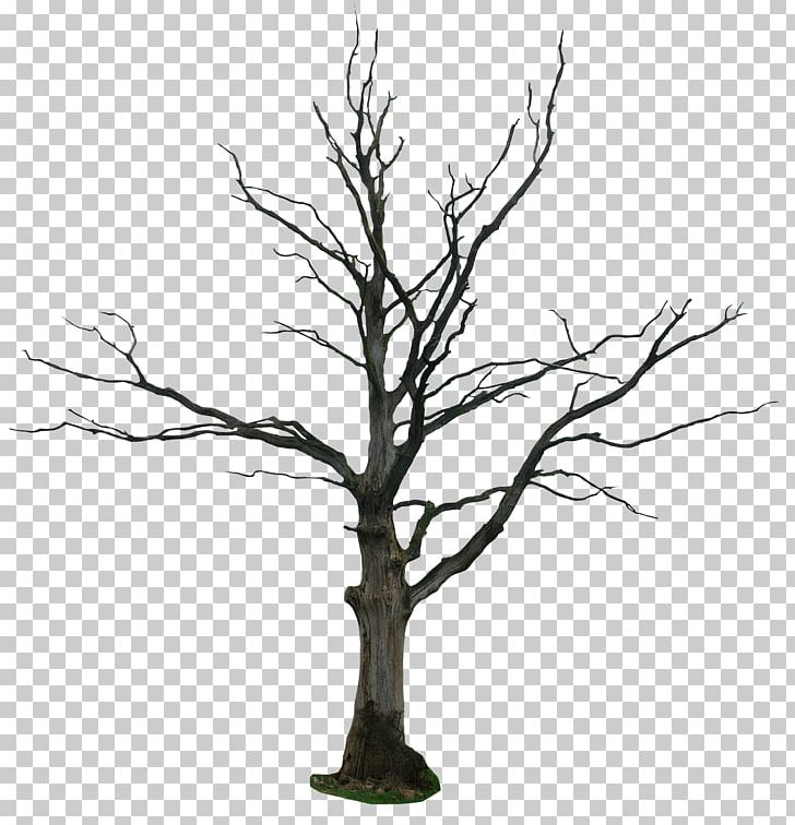 Tree Drawing Snag PNG, Clipart, Art, Black And White, Branch.