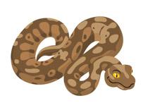 Reptiles Snake Clipart Clipart.