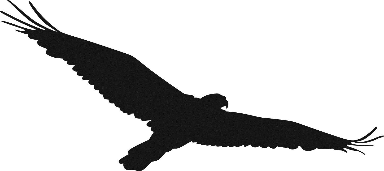 Best Hawk Clipart #17419.