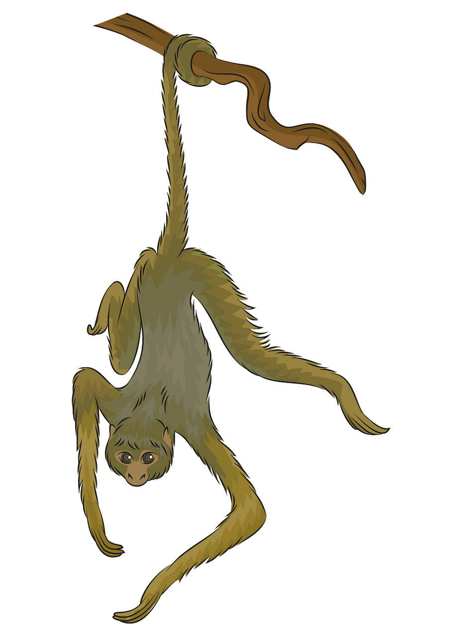 Spider monkey clipart. Free download..