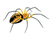 Free Spider Clipart.