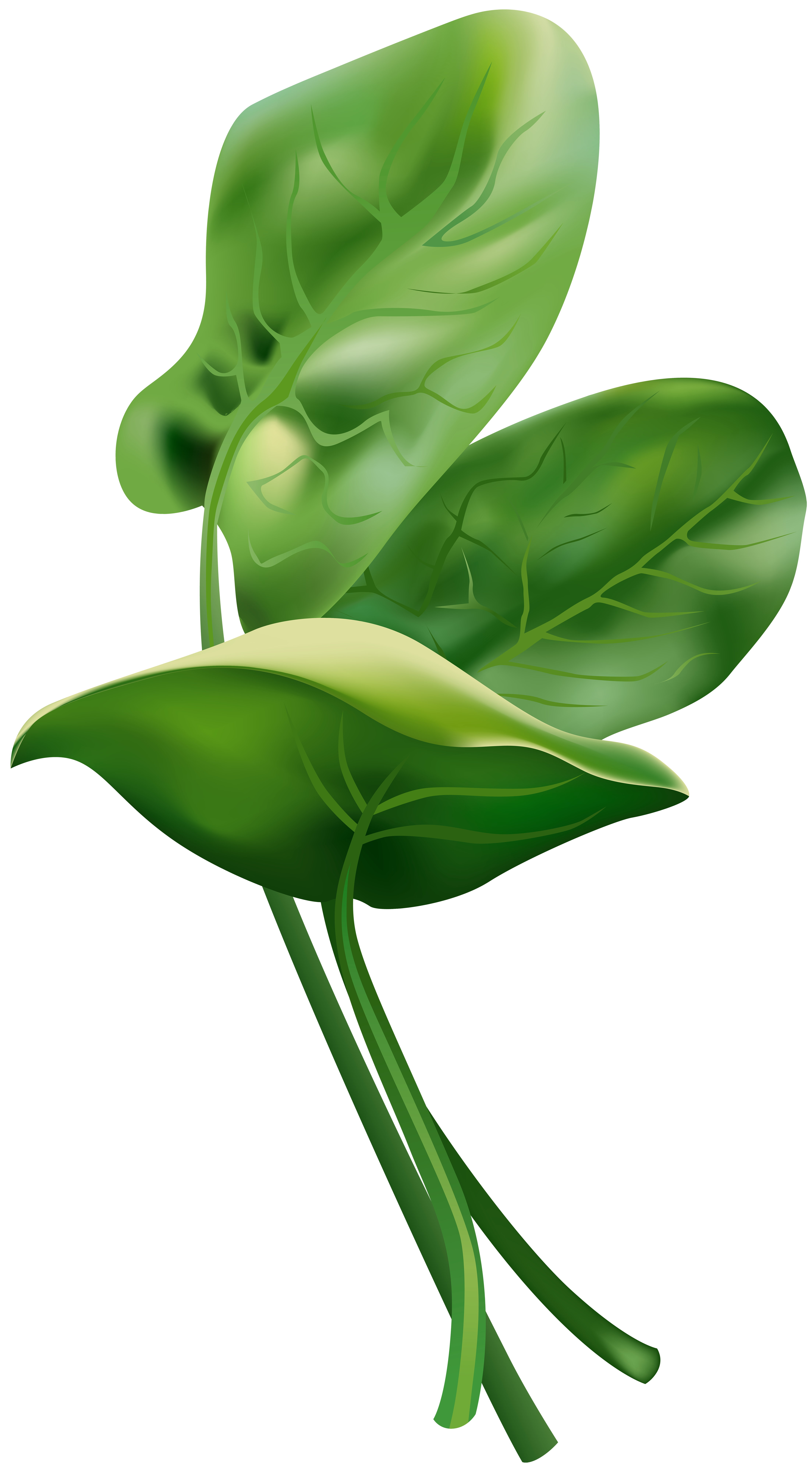 Spinach Free PNG Clip Art Image.