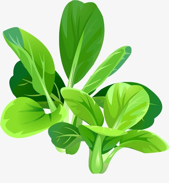 Spinach, Landscape, Beautiful PNG Transparent Image and Clipart for.