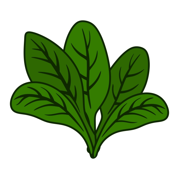 Free Spinach Clipart Pictures.