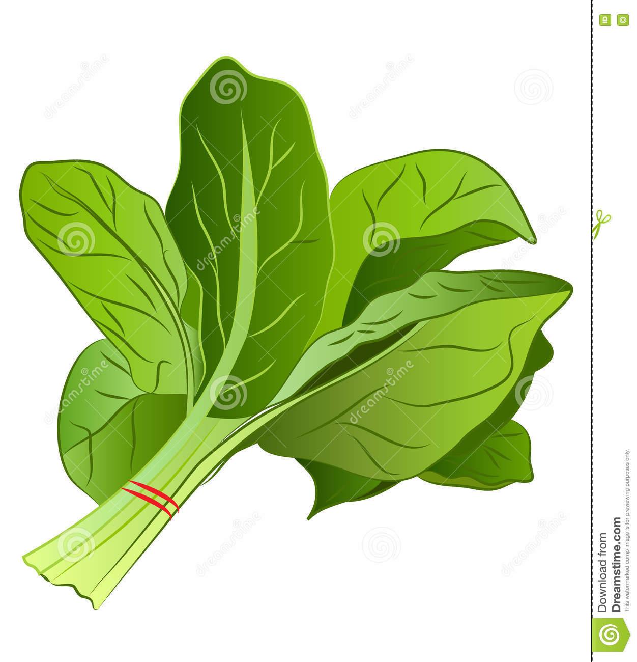Cartoon Spinach stock vector. Illustration of food, cartoon.