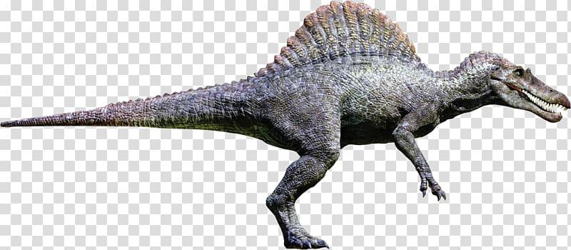 Spinosaurus Tyrannosaurus Giganotosaurus Ankylosaurus.