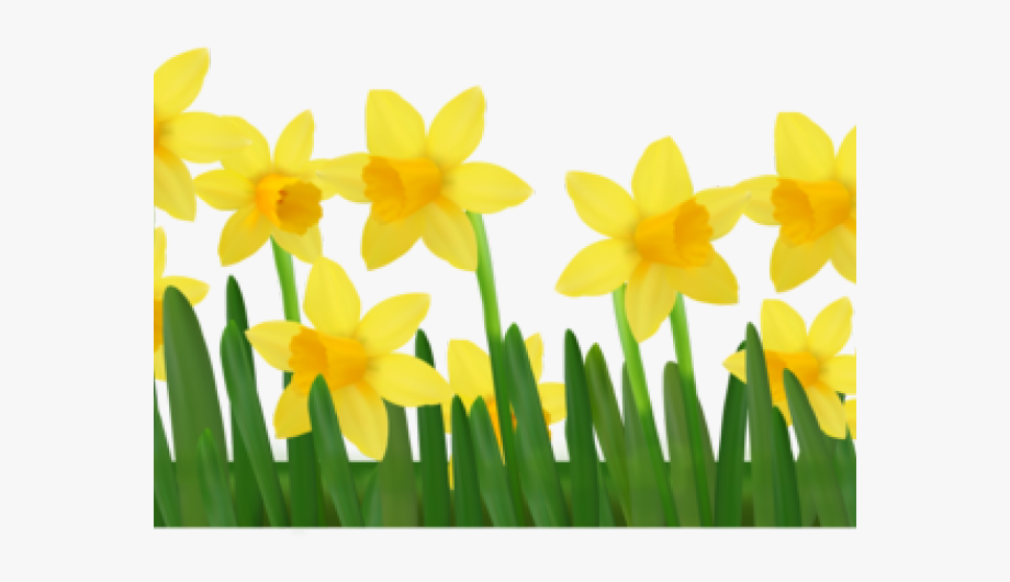 Daffodils Clipart Spring Break.