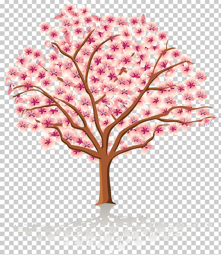 Spring Tree Blossom PNG, Clipart, Autumn, Blossom, Branch.