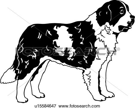 Clip Art of , animal, breeds, canine, dog, saint bernard, show dog.